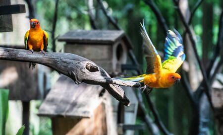 Photo pour Beautiful parrot, Sun Conure on tree branch - image libre de droit