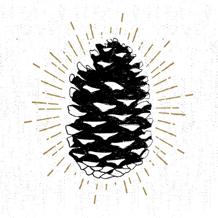 Illustration pour Hand drawn icon with a textured fir cone vector illustration. - image libre de droit