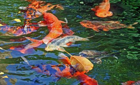 Foto de Fish Lake water park nature beauty bush - Imagen libre de derechos