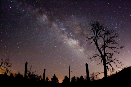 The Milky Way and fire-damaged trees  Paso Picacho Campground at Cuyamaca Rancho State Park in San Diego County, California USA
