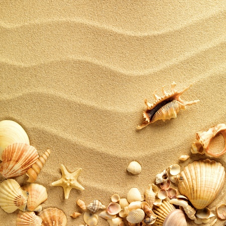 Foto de sea shells with sand as background - Imagen libre de derechos