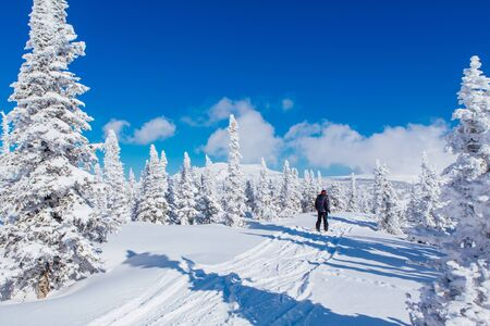 Photo for Man skier rides in a winter forest. Beautiful winter landscape with fur trees coveres with white snow on the background of blue sky in a sunny winter day. - Royalty Free Image