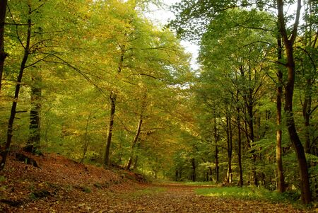 Forest path covered with foliage in autumn