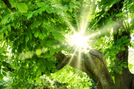 The summer sun shining beautifully through vivid green foliage