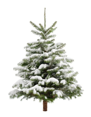 Perfect little Christmas tree in fresh snow,  isolated on pure white background
