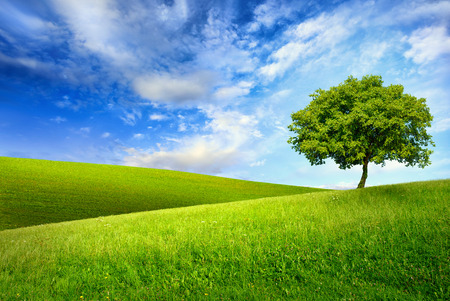 Photo pour Scenic paradise with a single tree on top of a green hill, blue sky and white clouds and another hilly meadow in the background - image libre de droit