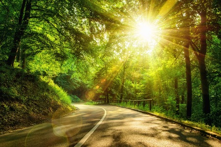 Landscape shot with the gold sun rays illumining a scenic road in a beautiful green forest, with light effects and shadows