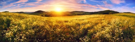 Panorama of a colorful sunset on beautiful meadow, wide format rural landscape with vibrant colors