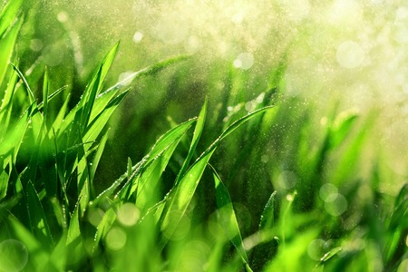 Grass closeup with fine water drops spraying down and creating a beautiful light effect background, shallow focus