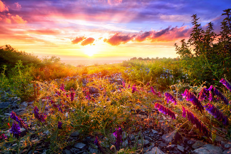Scenic sunset landscape with mixed vegetation in the warm sunlight and the colorful sky in the background