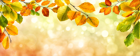 Colorful autumn beech leaves border on a beautiful nature bokeh background, wide panorama format