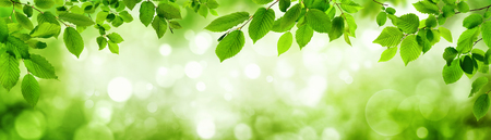 Photo pour Green leaves and blurred highlights in the background build a natural frame in panorama format - image libre de droit