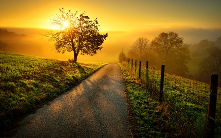 Idyllic rural landscape on a hill with a tree on a meadow at sunrise, a path leads into the warm gold light