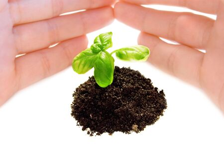 the plant and child hand