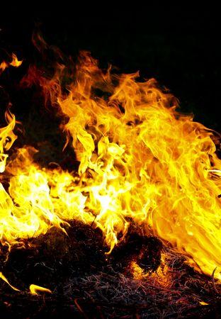 Fire flames raising, Burning fire close-up