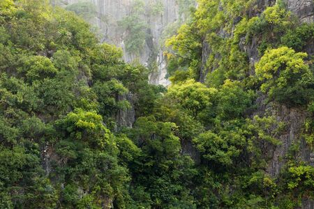 Rainforest on rocky cliff in the Halong bay Vietnam