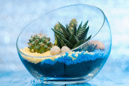 selective focus on a beautiful florarium in glass vase with succ