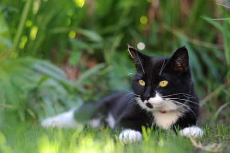 A black and white cat sheltering from the sun on some grass.