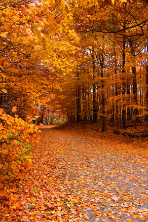 Trail Through Autumn Trees Wallpaper Mural