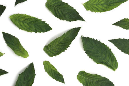 Photo for Texture of green fresh mint leaves lie on a white background - Royalty Free Image
