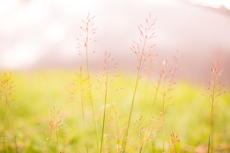 Abstract natural color background. Natural Blurred Bokeh.