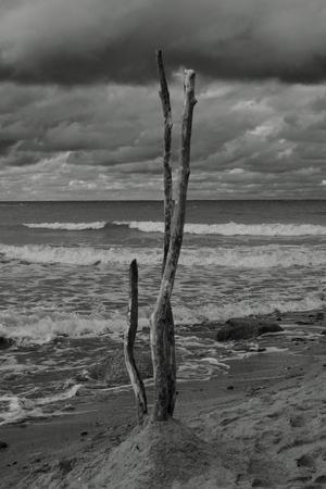 land art wooden sticks on the Baltic Sea beach black white