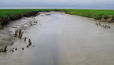 Nature reserve Salt meadows on the North Sea near Westerhever