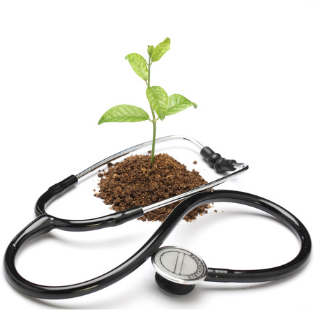 Young plant and stethoscope on white