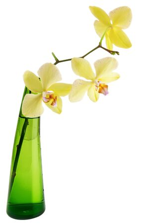 yellow orchid in the green glass vase over the white background