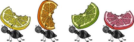 Ilustración de Ants carrying citrus fruit slices. - Imagen libre de derechos