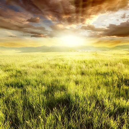 Golden grassland on sunset