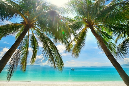 Beautiful Sunny Beach With Palm Trees In The Background Of