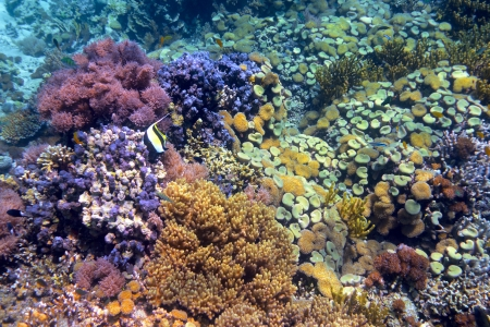 Colorful coral reef with hard corals at the bottom of tropical sea Indonesia, island Menjangan  underwater photo
