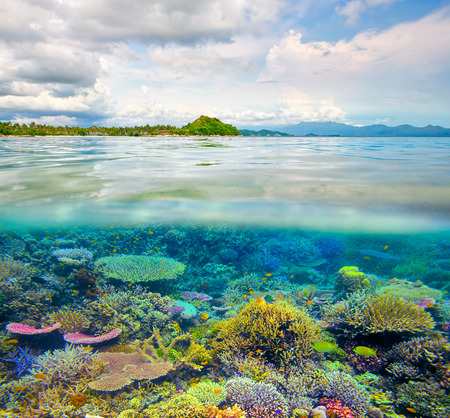 Coral reef in clear tropical waters in front of exotic island