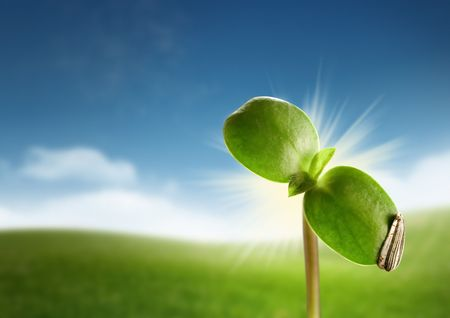Photo pour A seedling sprouting on a farm spring morning. - image libre de droit