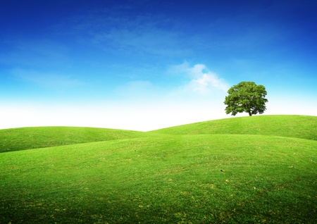 Photo for Green summer landscape scenic view. - Royalty Free Image