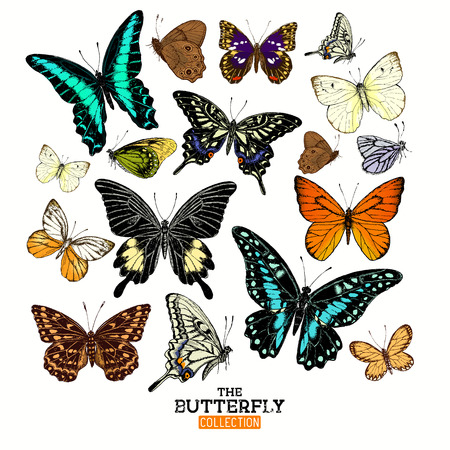 Illustration pour Realistic Butterfly Collection. A set of butterflies, hand crafted vector illustration. - image libre de droit