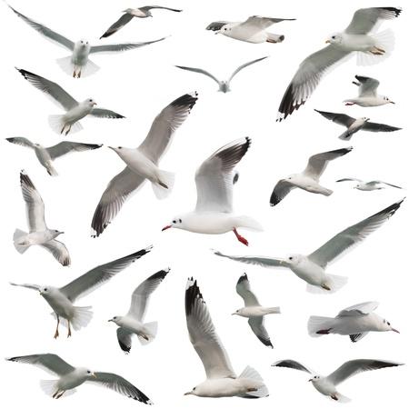 Photo for birds set isolated on white - Royalty Free Image