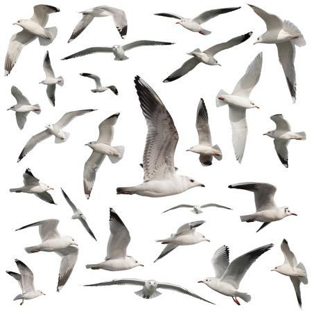 birds set isolated on white