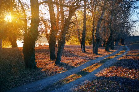Photo pour ground road and beautiful trees in the autumn forest,bright sunlight with shadows at sunset - image libre de droit