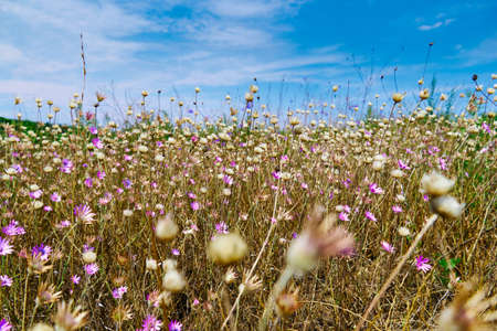 Photo for beautiful summer landscape with pink wild flowers - Royalty Free Image