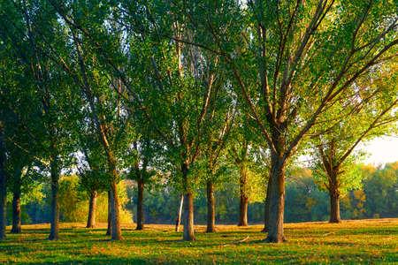 Photo pour colorful autumn forest landscape, trees with shadows at beautiful sunset, bright sunlight - image libre de droit