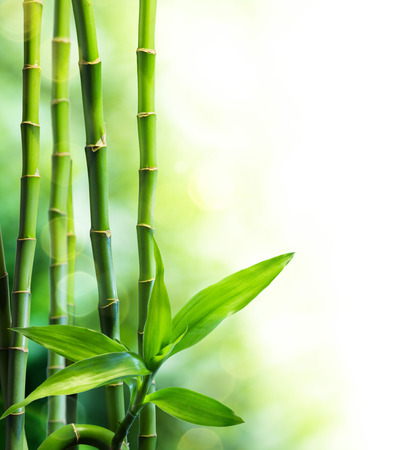 many bamboo stalks and light beam