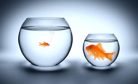 Photo pour big goldfish in a small aquarium - outgrown concept  - image libre de droit