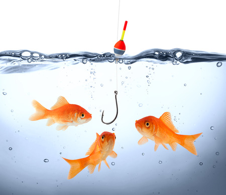 Photo pour goldfish in danger - concept deception  - image libre de droit