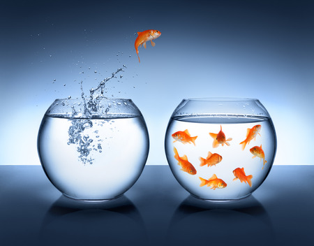 goldfish jumping out of the water - alliance concept