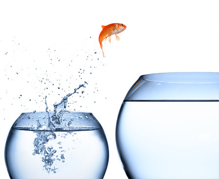 Foto de goldfish jumping out of the water - improvement concept  - Imagen libre de derechos