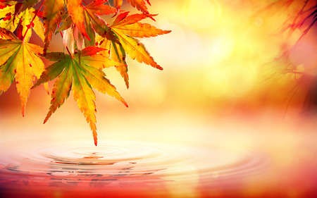 Photo for Autumn spa background with red leaves on water - Royalty Free Image