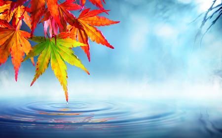 zen autumn - red maple leaves on pondの写真素材