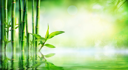 Bamboo Background - Lush Foliage With Reflection In The Water